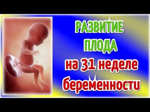 Развитие плода на 31 неделе беременности/Календарь беременности!