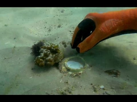 COLONIAL HARBOR #4 - POTTERY and GOLD!!  metal detecting underwater
