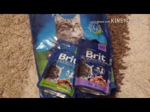 Отзывы о корме для кошек/котов Brit (сухой, пауч)