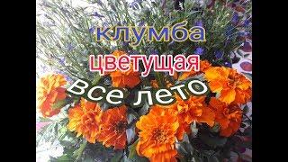 видео Цветники из однолетних цветов