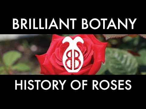 Voices of Gotham sings The Story of the Rose (Heart of My Heart)
