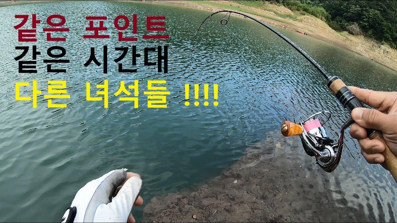 쏘가리낚시. 같은 장소 다른 액션에 엄청난 녀석이 물었다!  이정도면 마릿수인가요?  korea lure fishing.