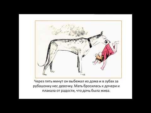 Вопрос: Почему друг человека не конь, корова или попугай, а именно собака?
