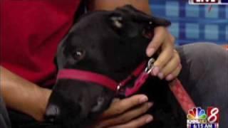 4/20/09 Khnl_gentle Leader Dog Collar