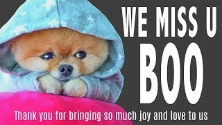 Tributes To Boo Cutest Dog