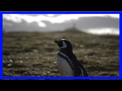 Penguin disaster in antarctica: two chicks survive from colony of 40,000- News N&N Chanel