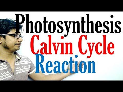 Calvin cycle photosynthesis