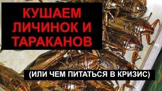 Экстремальное поедание тараканов и личинок в Таиланде