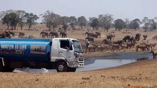 Мужчина по собственному желанию ездит по саванне с цистерной воды, чтобы напоить диких животных