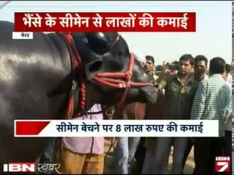 Yuvraj Is Bhaise Ka Naam, 'Vicky Doner' Jaisa Kaam!