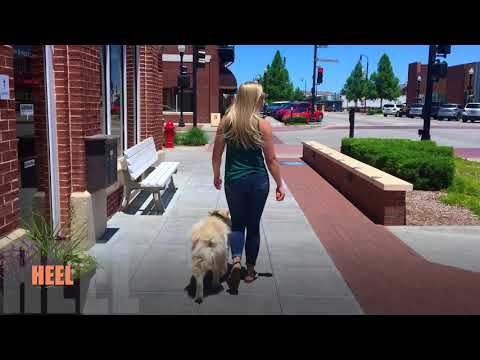 1.5 Year Old Chow Chow | Best Chow Chow Dog Training Oklahoma | Off Leash K9 | Board & Train