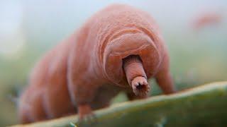 実在する不死の動物7選 thumbnail