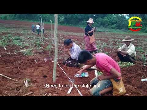 Burmese military had confiscately farmland   တပ်ႉသိုၵ်းမၢၼ်ႈႁိမ်တီႈလိၼ်ၵူၼ်းမိူင်းၵျွၵ်ႉေမး  ၵေႃသိုဝ်ႇၶၢဝ်ႇၵူၼ်းမိူင်းတႆး 11/06/2018