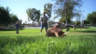 Dog Training In Orange County