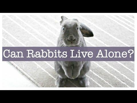 Should I Get A Second Rabbit? Can Rabbits Live Alone?