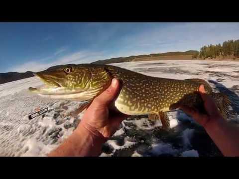 Ice Fishing Multi Species (Pactola SD)