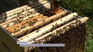 Yvelines | Chavenay : Un capteur pour mieux s'occuper des abeilles