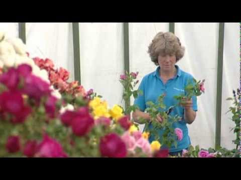 TFS13 ITV Westcountry - News Report Thursday 1st August 2013