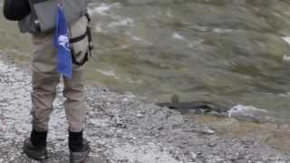 Port Hope ,Ganaraska Salmon Run Fall 2013