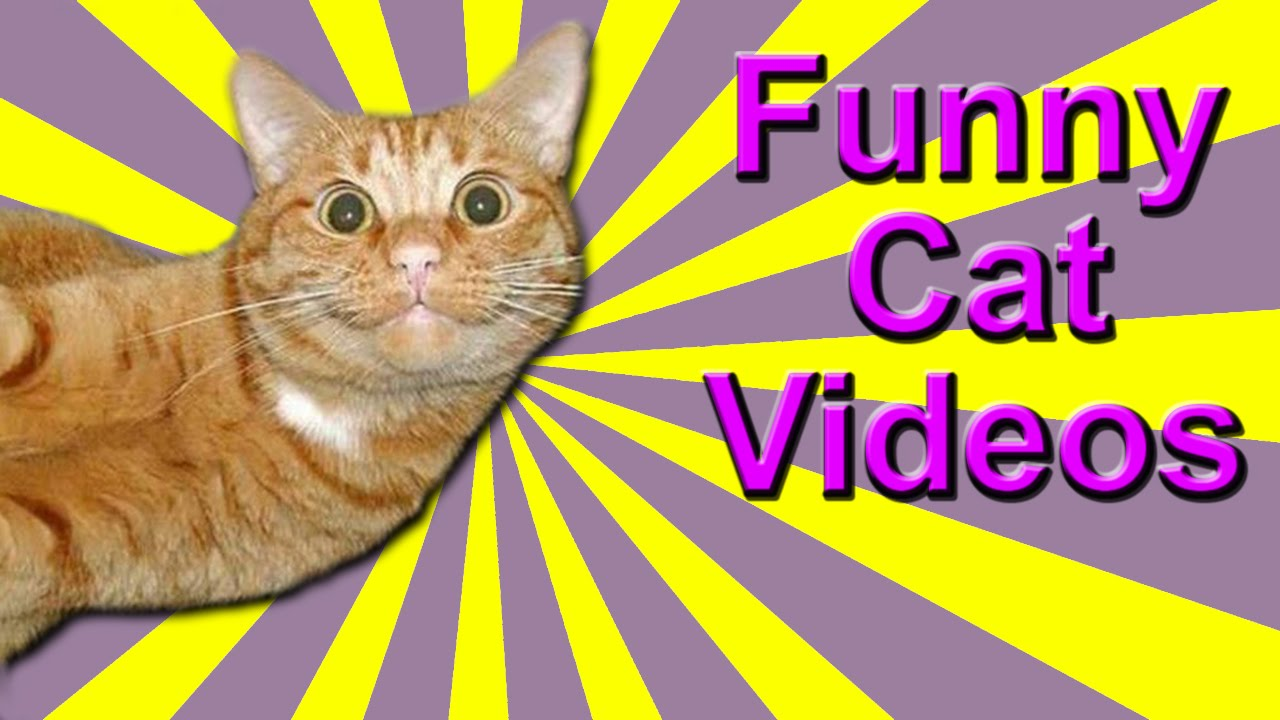Funny Cat Videos - Dubstep Cat, Dancing Cats, Rapping Cat ... Funny Cat Videos Episodes