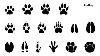Animal Footprints - Picture Play