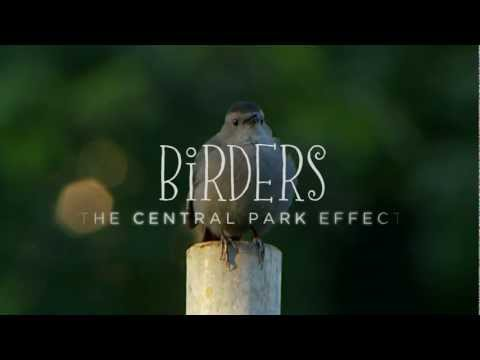 Birders: The Central Park Effect - Official Trailer