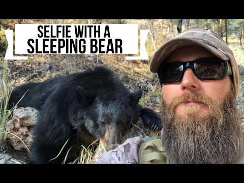 Arizona Bear Hunt: Nov 2018