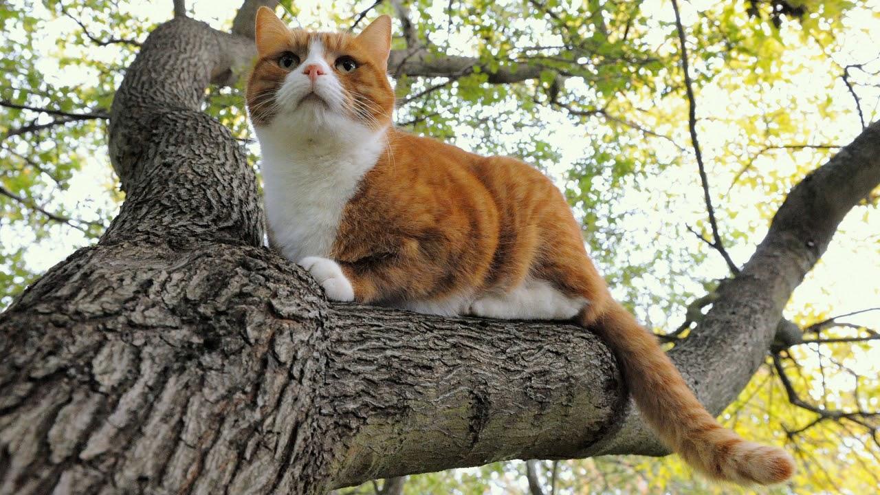Дерево и кот картинки