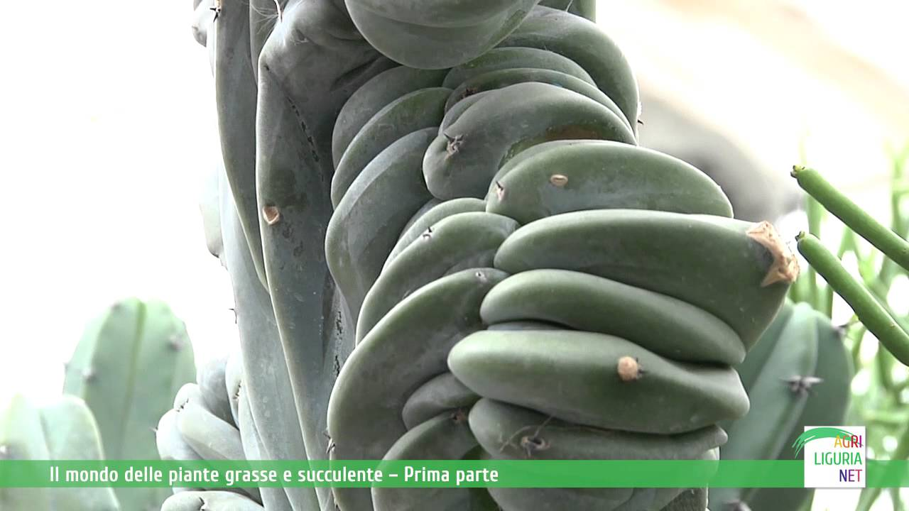 Il mondo delle piante grasse e succulente seconda parte for Piante grasse succulente