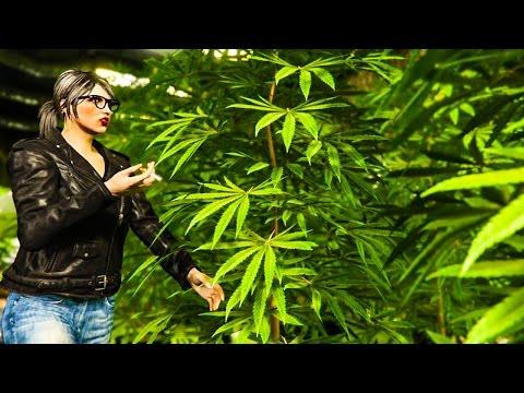 ON LIQUIDE LES STOCKS DE DROGUE GTA 5 ONLINE