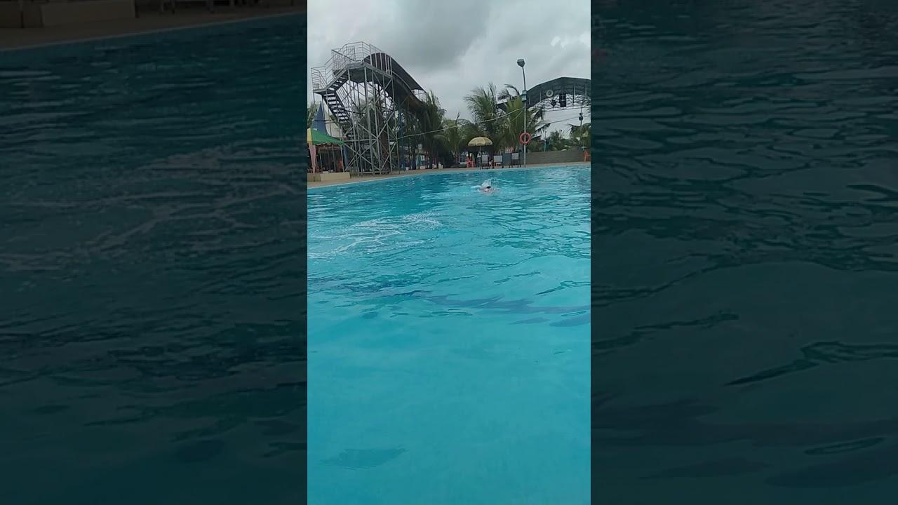 Cara berenang gaya dada, cara berenang gaya bebas - YouTube