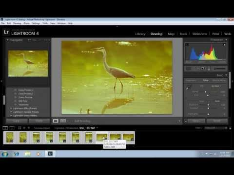 How to Apply Lightroom Preset to All Photos