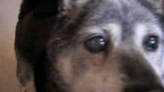 北海道に住む柴犬の「てっぺい」15歳です。外に出歩く時間は 短くなりま...