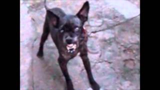 Rock roll o cão posuido pelo diabo