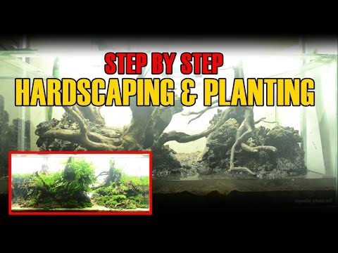 syep-by-step-hardscaping-dan-planting-aquascape-tank-90-cm--ranran-r-asgar
