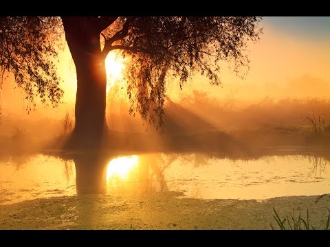 8 Hour Sleep Music, Calm Music for Sleeping, Delta Waves, Insomnia, Relaxing Music, ☯169