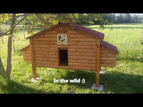 Making a chicken coop for 10 - 15 hens (photos+videos)