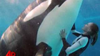 Whale Expert: SeaWorld Attack Was 'Premeditated'