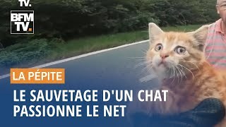 Le sauvetage d'un chat passionne le Net