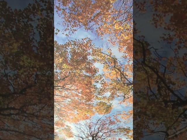 Смотреть видео Балкон с подиумом  (индивидуальный дизайн)