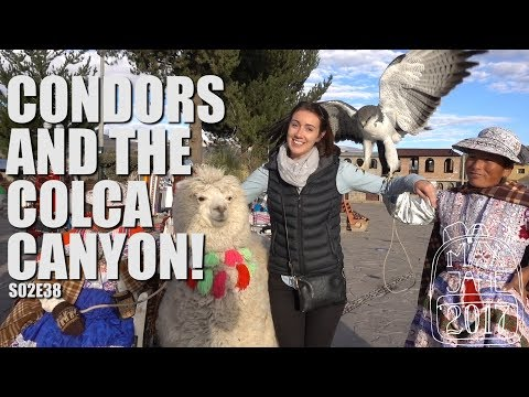 Colca Canyon, Peru | Exploring the Colca Canyon! | South America Travel Vlog E38