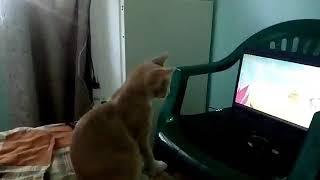 КОТ смотрит TV