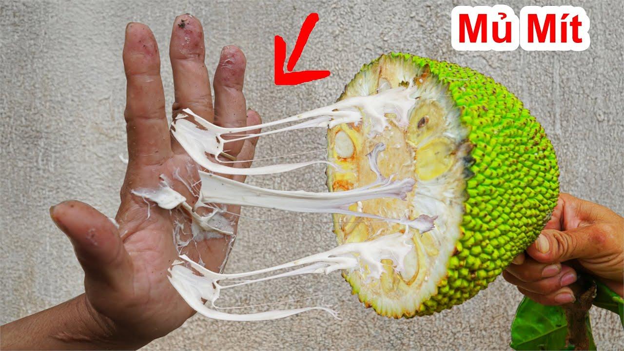Khó Tin ! Cách Tẩy Sạch Mủ Mít Trong 30 Giây/Experiment :clean jackfruit latex.Thử Thách Bổ Trái Mít