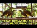 Kolibri Kelapa Trotol Gacor Ngalas Bongkar Isian  Mp3 - Mp4 Download