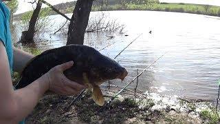 Рыбацкие будни Головищинского пруда. Лучшая рыбалка в Воронежской области!