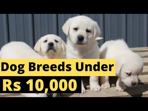 Dog breeds under 10000 rupees In India l Cheap Dogs Breeds Price In India 2018 l Dogs in Hindi