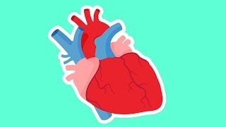 How the Heart Works for Kids    Valentine's Day Biology   Anatomy for Kids thumbnail