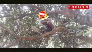 New Kokborok funny video 2018  // ani bosok  fan tong  // strong man 💪💪💪💪💪