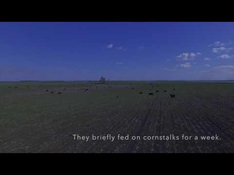 Drought hits South Dakota farmers hard