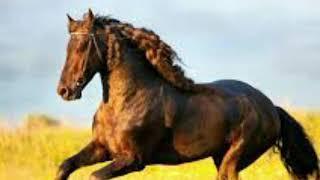 Детская песенка Далеко-далеко ускакала в поле молодая лошадь